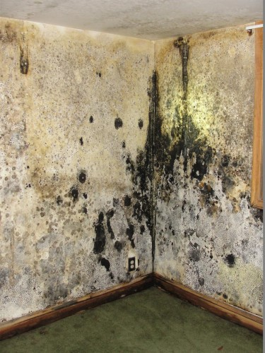 Saint Louis Home Inspection Serious Mold Issues